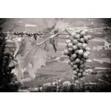Massimago Wine Relais - MasterChef Experience - 4 Giorni 3 Notti