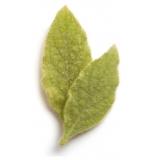Nu Skin - Epoch Blemish Treatment - 15 ml - Body Spa - Beauty - Professional Spa Equipment