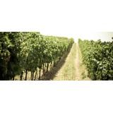 Massimago Wine Relais - Valpolicella Wine & Relax - Appartamento - 4 Persone - 3 Giorni 2 Notti