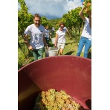 Massimago Wine Relais - Valpolicella Wine & Relax - Appartamento - 4 Persone - 4 Giorni 3 Notti