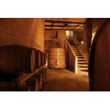 Conte Spagnoletti Zeuli - Tour Onofrio - Guided Tour of the XVIII Cellar, Olive Oil Plant, Vineyards and Olives - Daily