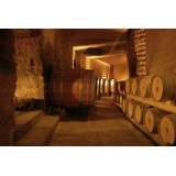 Conte Spagnoletti Zeuli - Tour Spagnoletti - Guided Tour of the XVIII Cellar, Olive Oil Plant, Vineyards and Olives - Daily