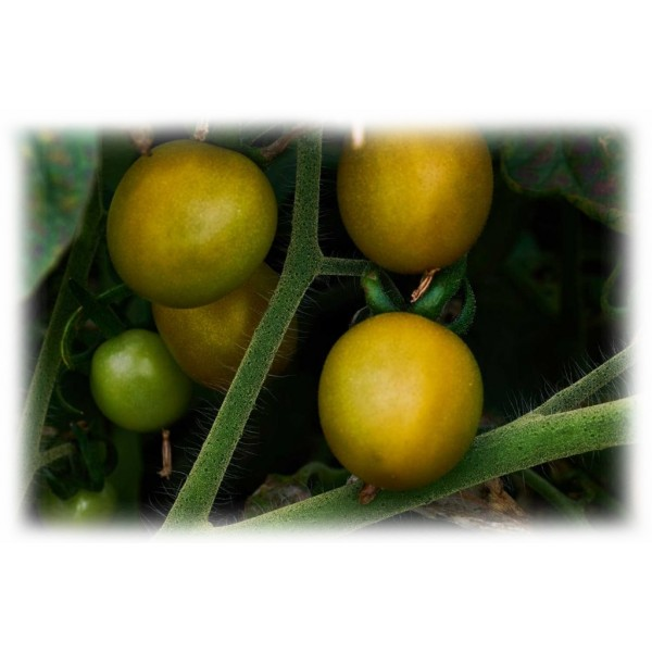 Semino il Pomodoro - Yellow Cherry Tomatoes - Glass - Preserved Foods - 580 gr