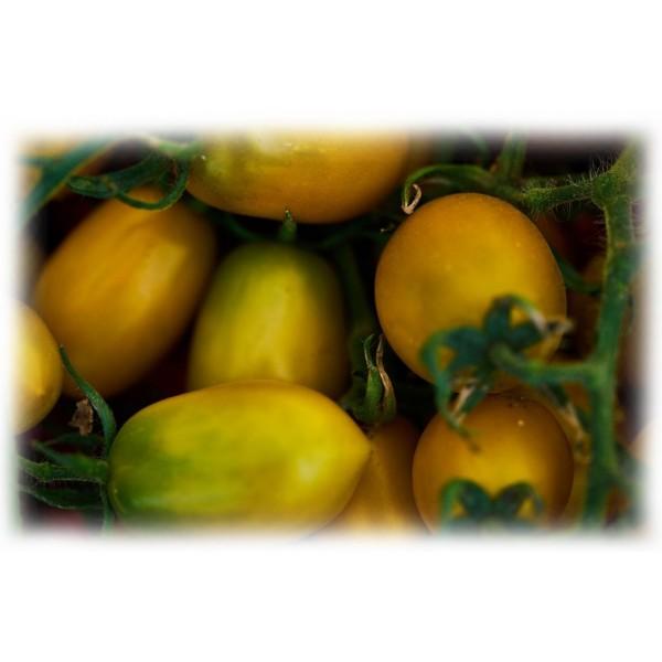 Semino il Pomodoro - Pomodori Datterini Gialli - Latta - Conserve - 400 gr