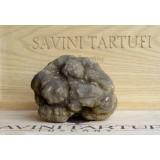 Savini Tartufi - Alla Scoperta del Tartufo - Truffle Experience - Visita Guidata, Caccia al Tartufo e Degustazione - In Giornata