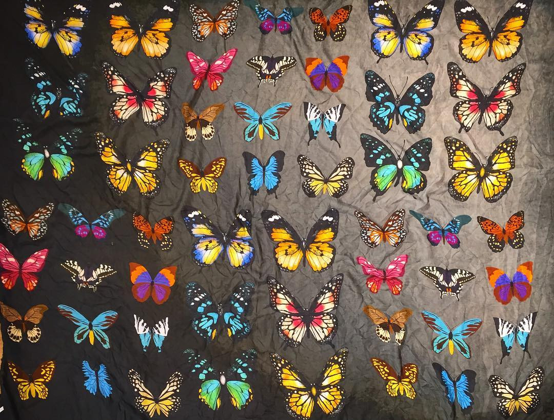 22%20Avvenice%20-%20813%20Ottotredici%20Official%20-%20New%20Collection%20-%20Butterflies%20Brasileiro.jpg