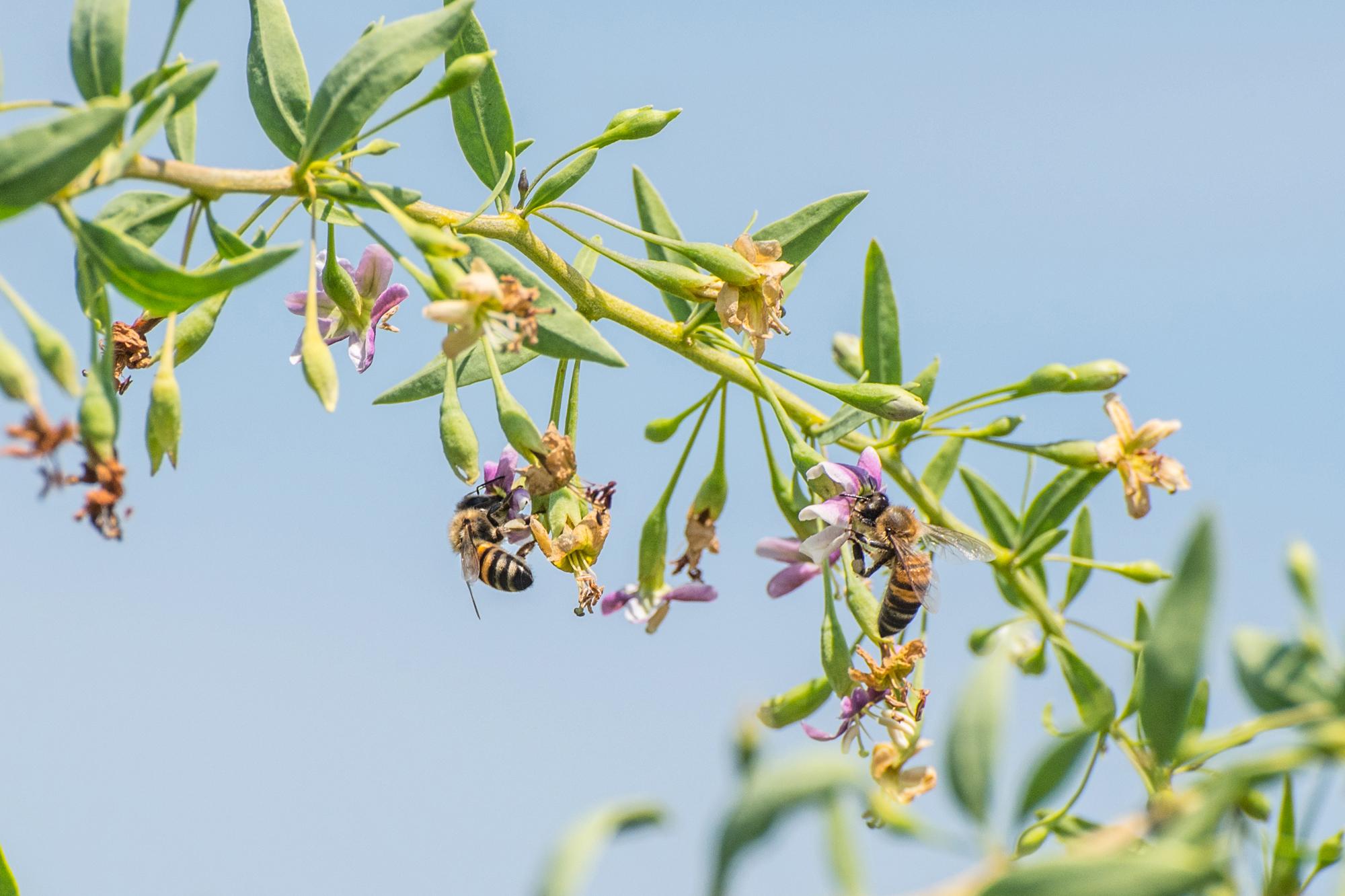 0ffcf0ee2a Un'agricoltura sostenibile non può che promuovere la presenza di api sui  propri suoli, preziose impollinatrici naturali dei fiori che contribuiscono  a ...